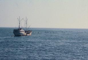 Navio na pesca à linha