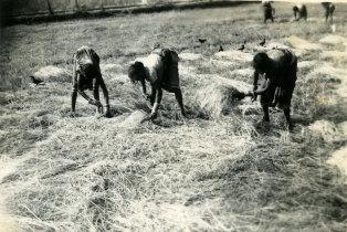 Camponeses em Margão