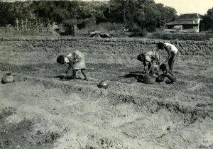 Trabalho Agrícola em Navelim