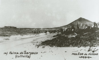 Sargaceiros em Moledo