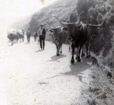 Pastar o gado
