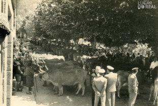 Feira de gado