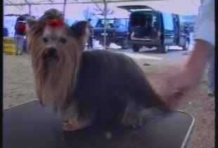 Exposição Canina