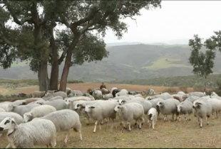 Lã em Tempo Real