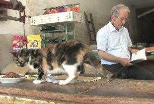 A Loja do Gato